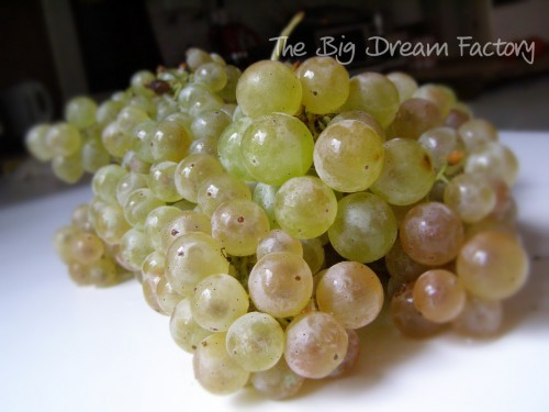 bunch of grapes - Copy