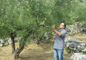 Enzo's vacation Place in the olive grove